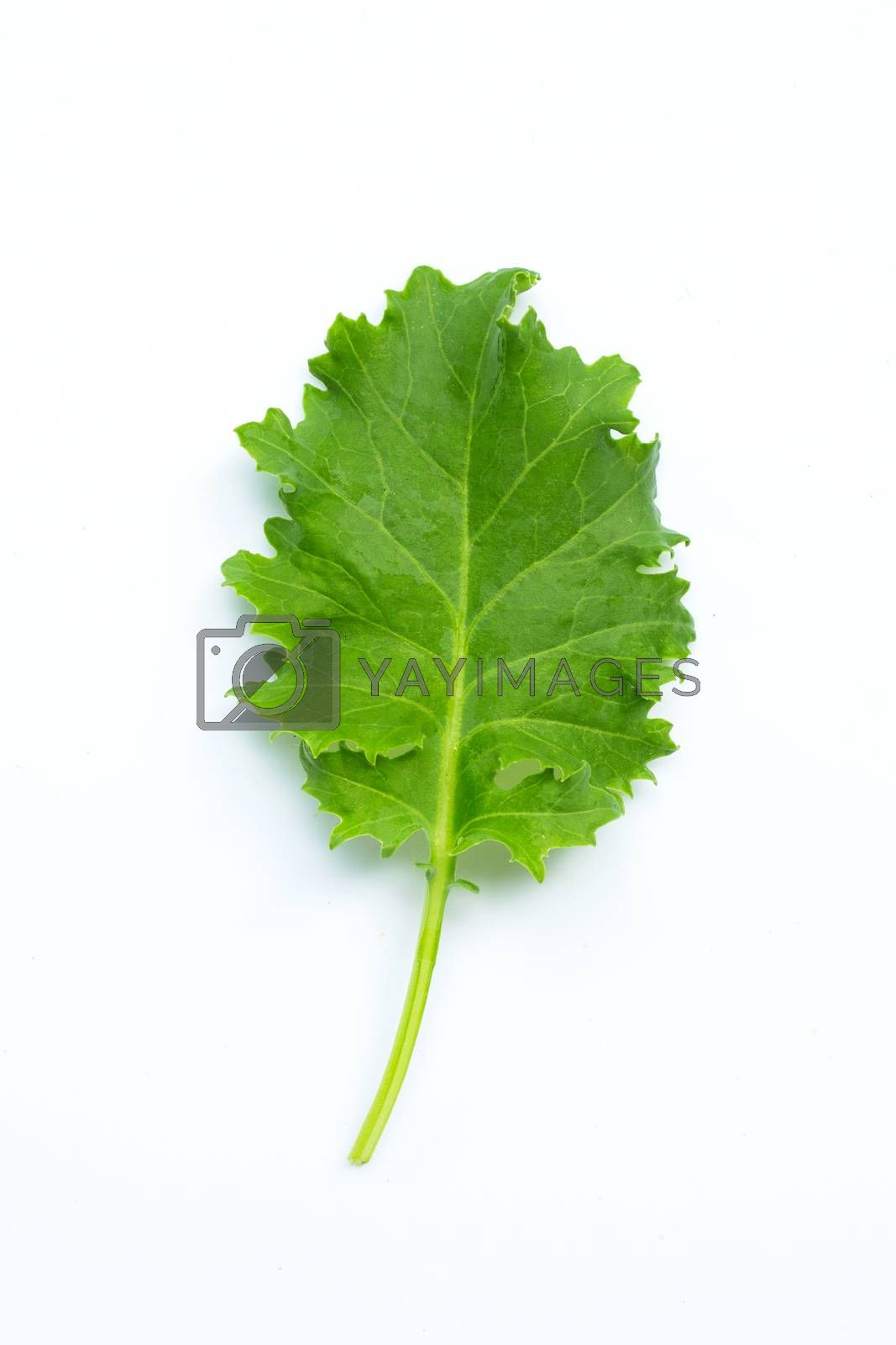 Kale leaf on white background. Top view