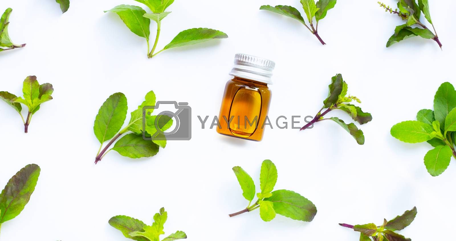 Essential oil bottle with holy basil leaves on white background. Top view