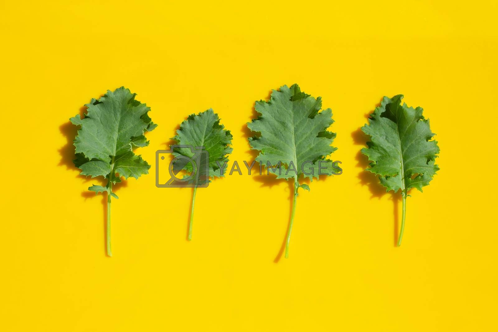 Kale leaves on yellow background. Top view