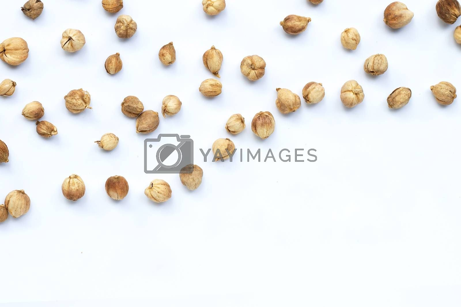 Siam Cardamom or Kapulaga on white background.