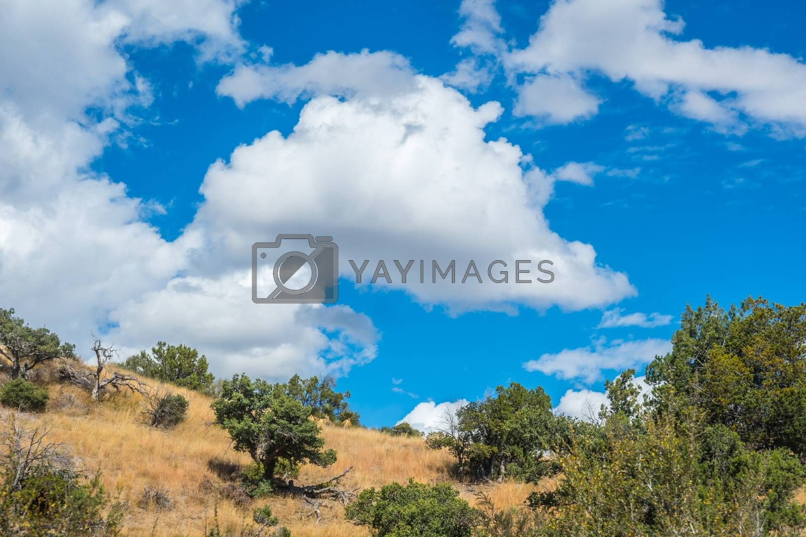 Epic landscape scenery while taking a stroll of the grassland