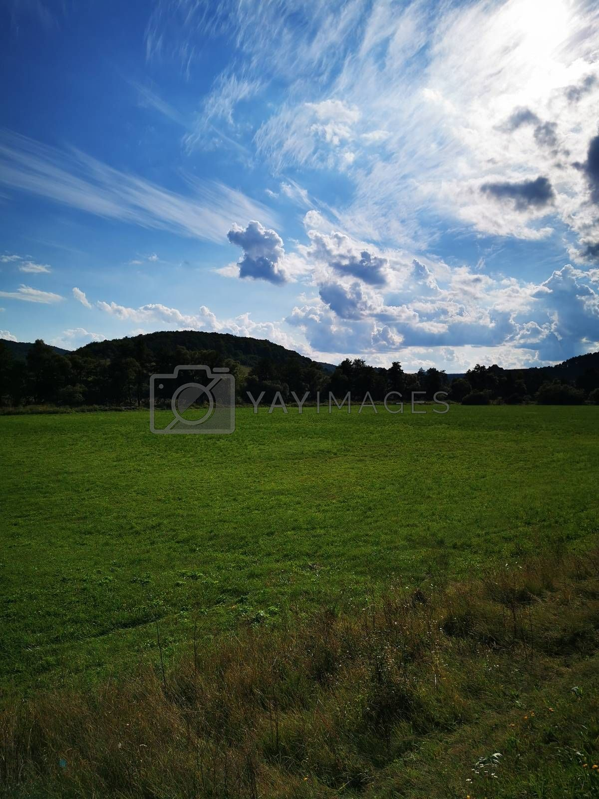 Royalty free image of A large green field with trees in the background by balage941