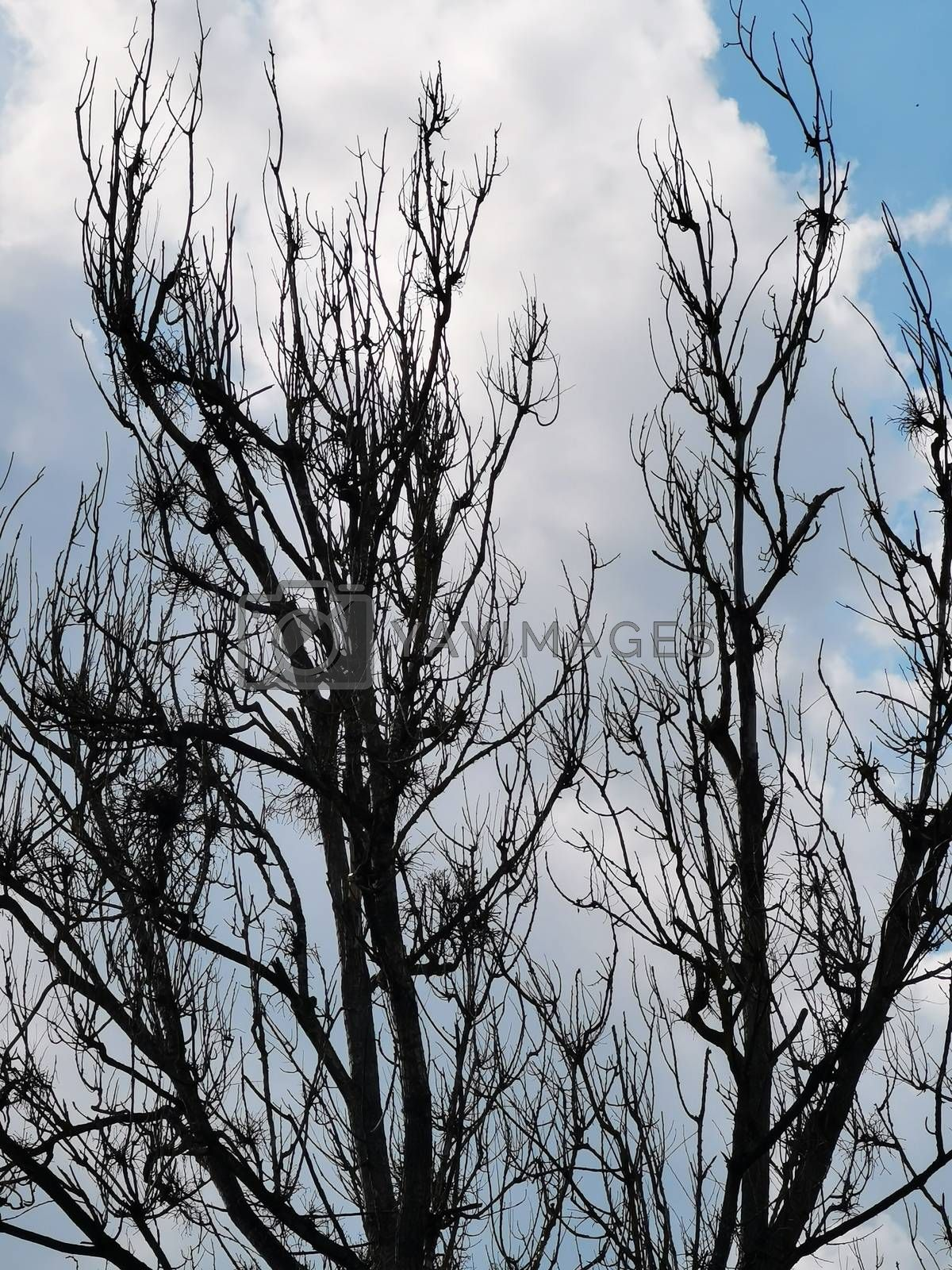 Royalty free image of Large branches of trees in the Aggtelek National Park by balage941
