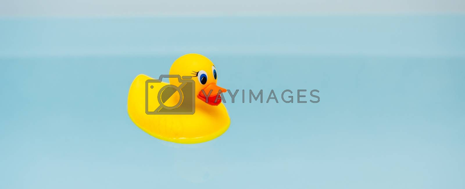 yellow rubber duck in blue water of bathtub