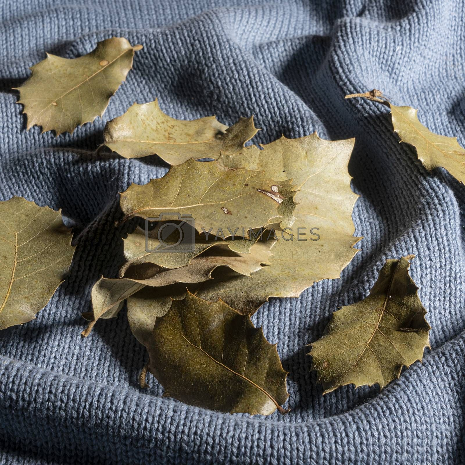 some dry leaves on a sweater in autumn