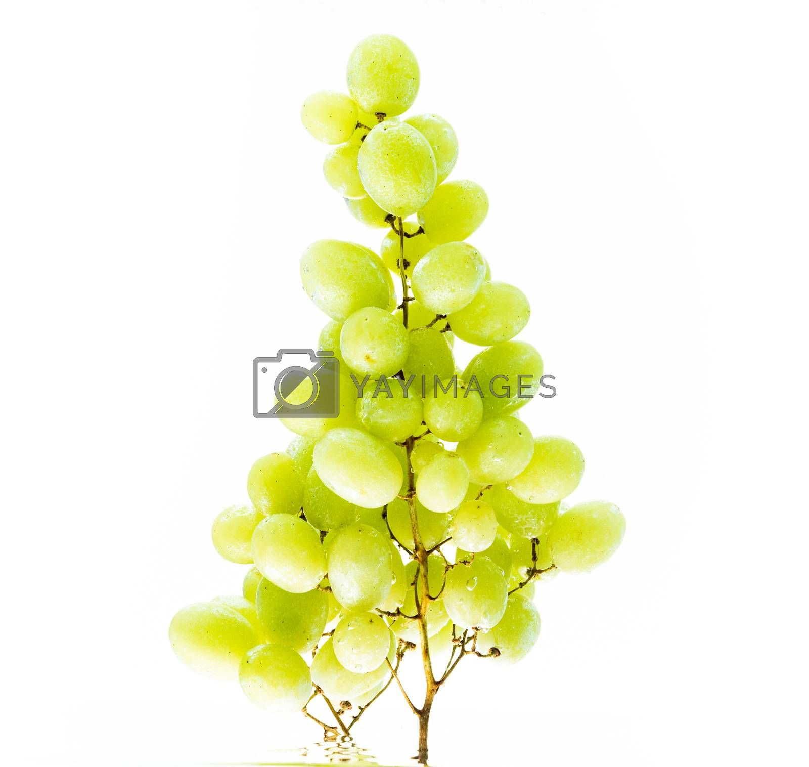 Fresh green grapes in water against white background. Health concept.