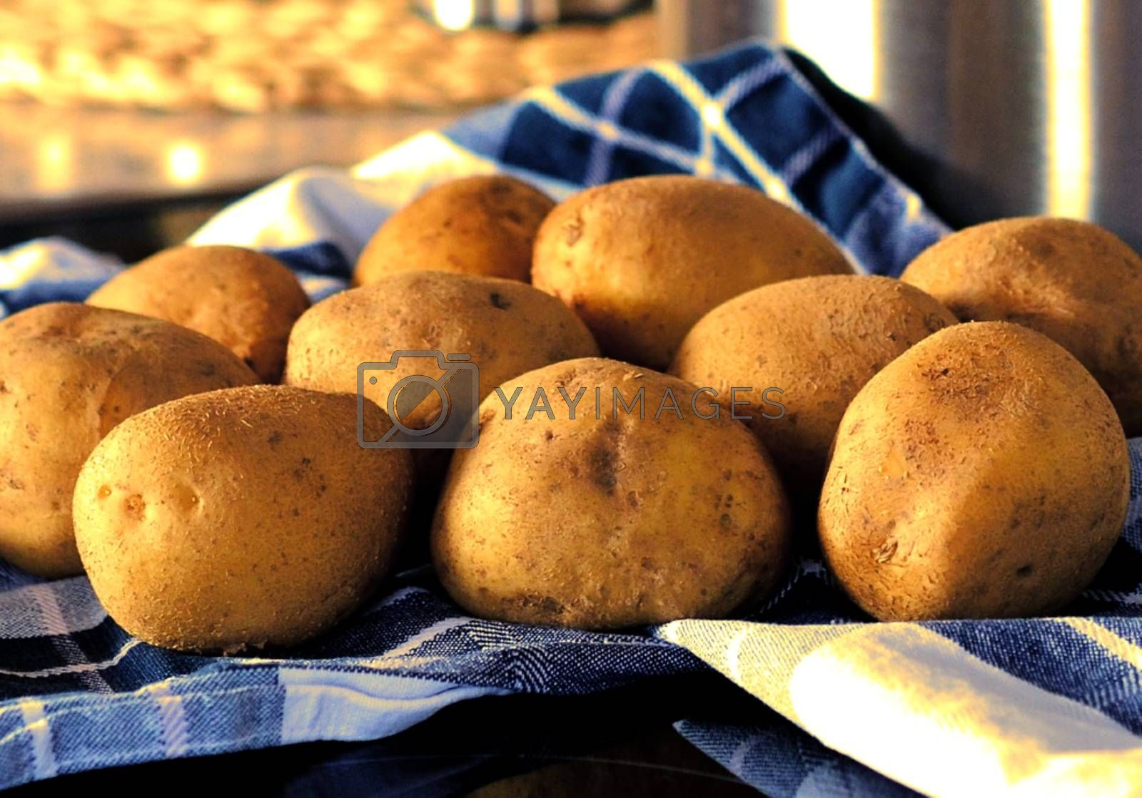 Royalty free image of Potatoes on the blue kitchen towel by balage941