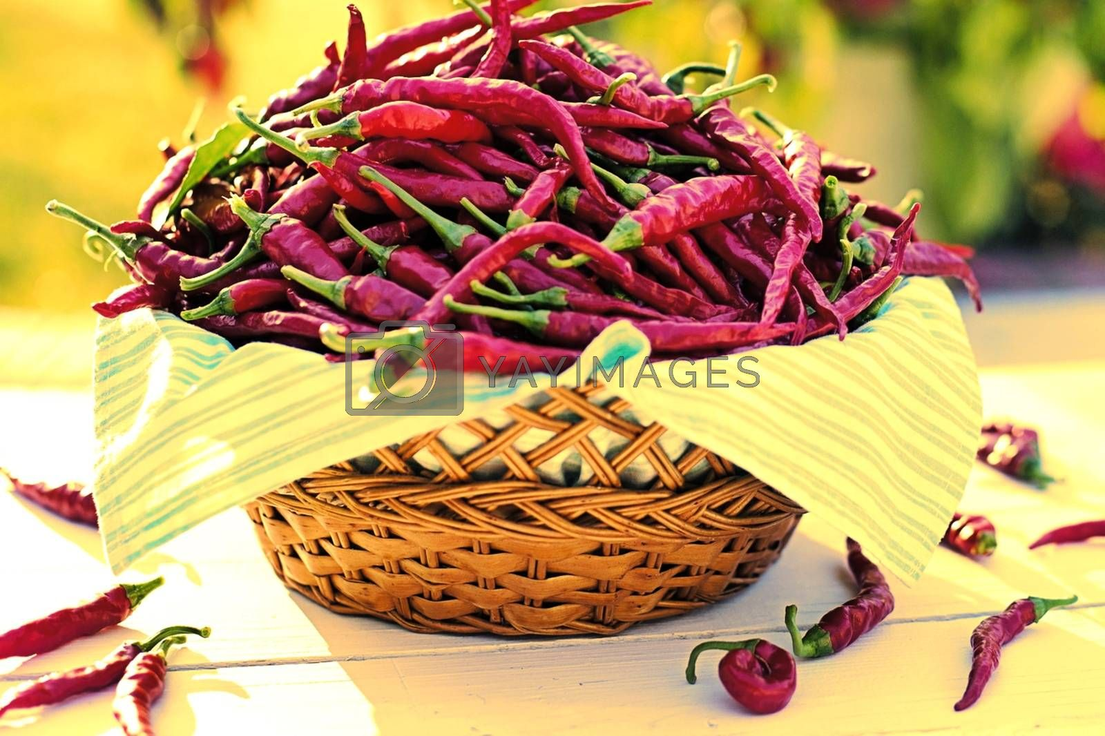 Royalty free image of Chili peppers in wicker basket in the garden by balage941