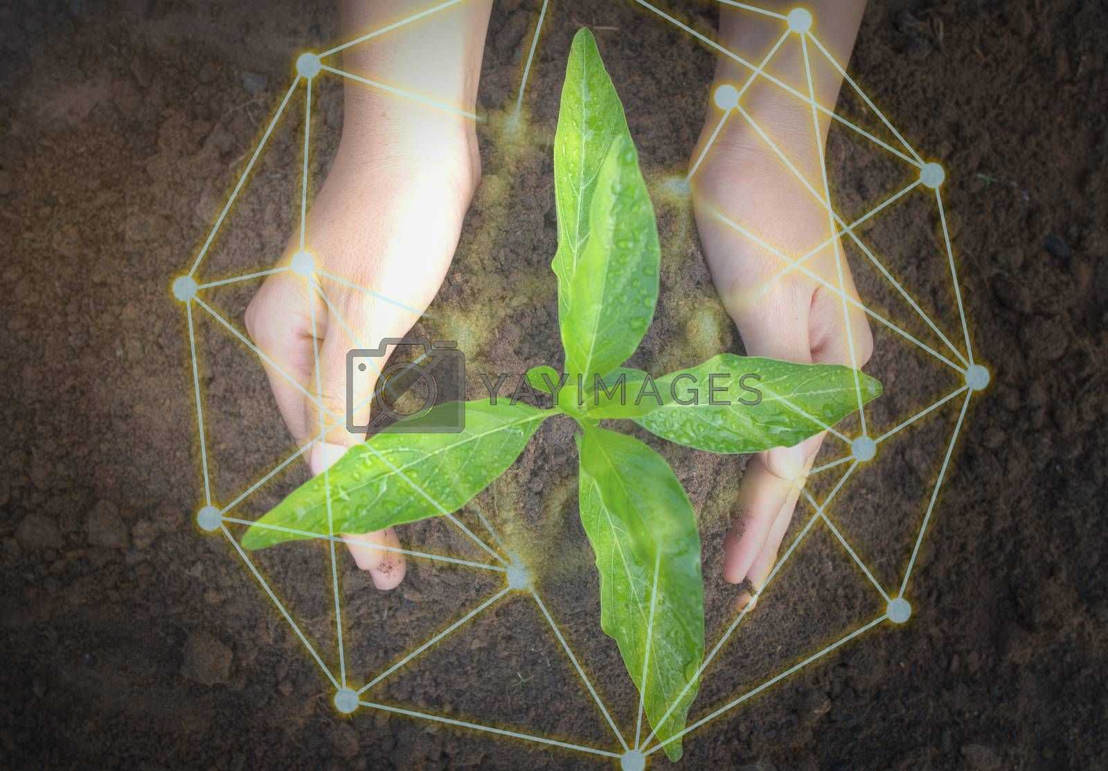 The top view of the hand holding the seedling shows natural environmental friendliness, protection and conservation.