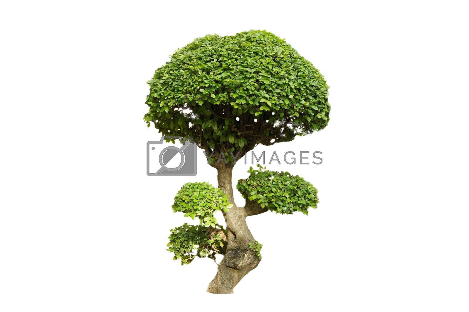 Green shrubs decorative branches isolated on white background