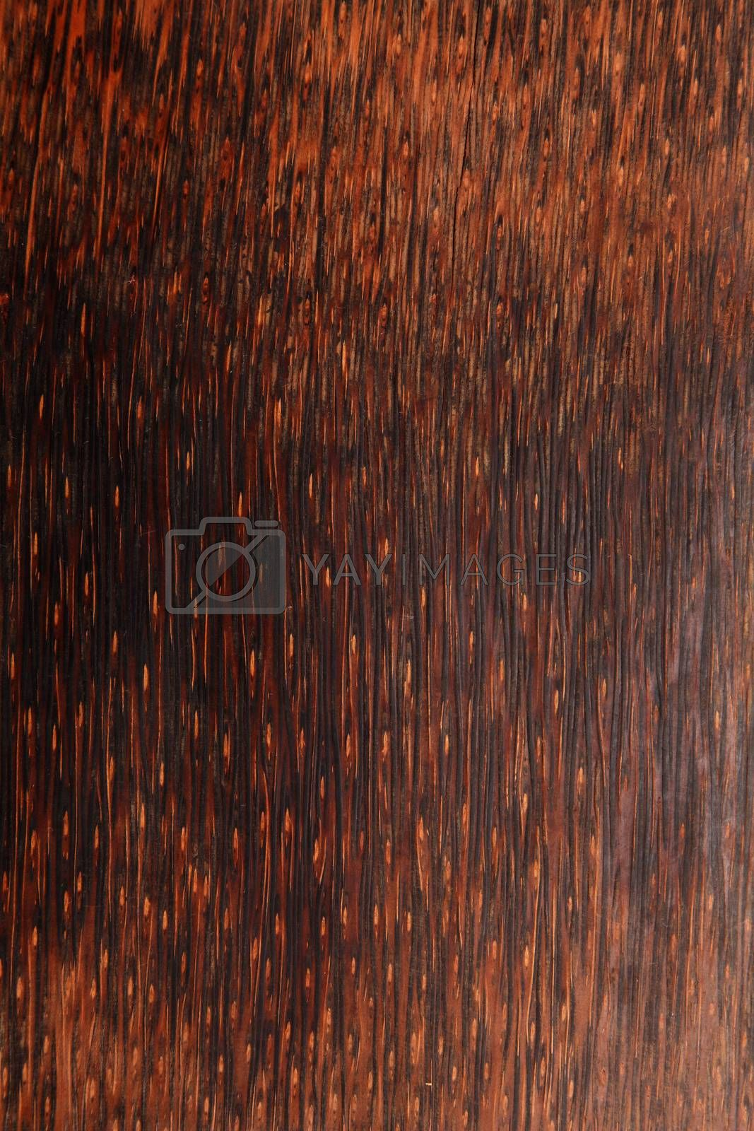 texture of the wood texture