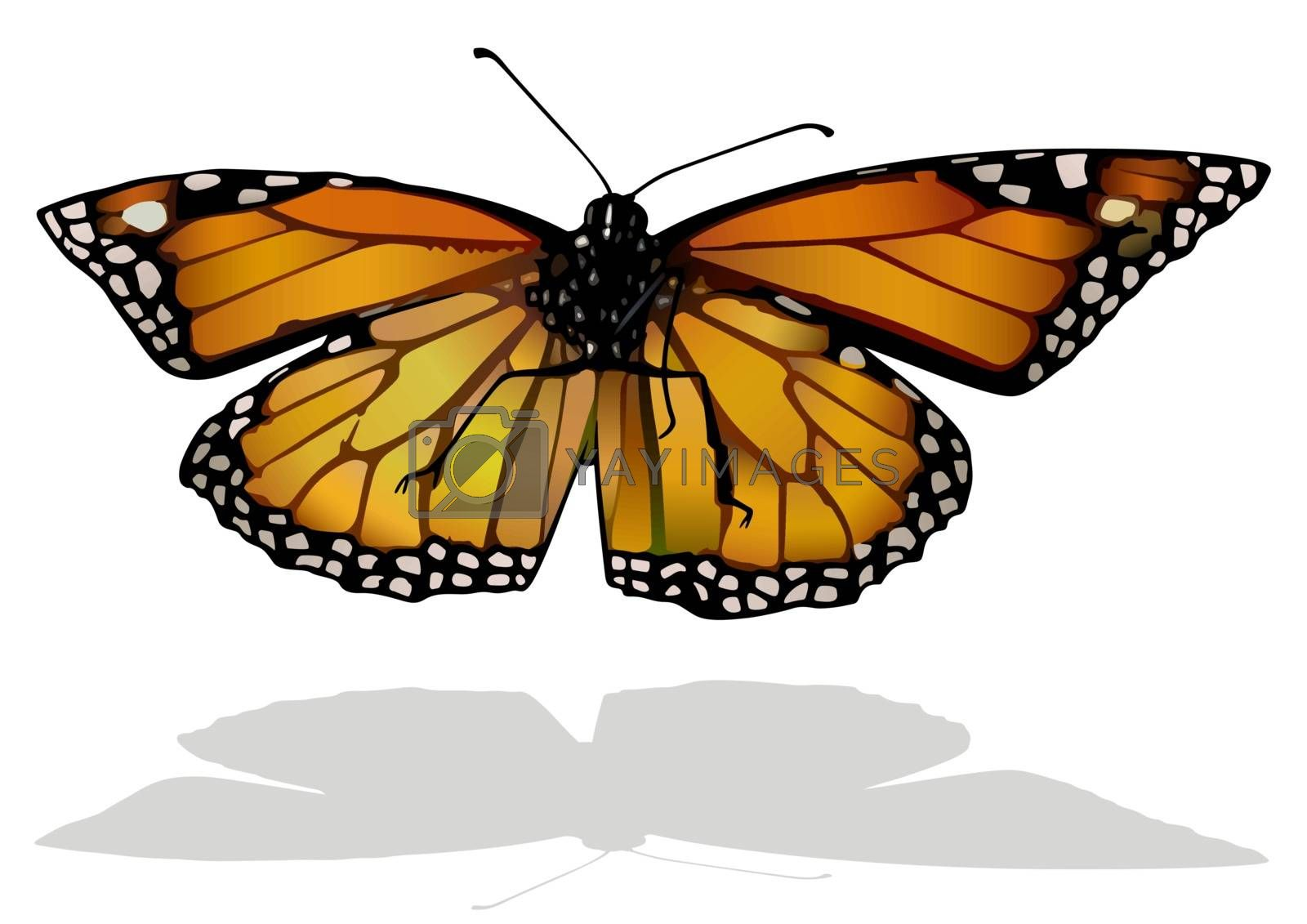 Monarch Butterfly - Isolated Colored Illustration with Shadow on White Background, Vector