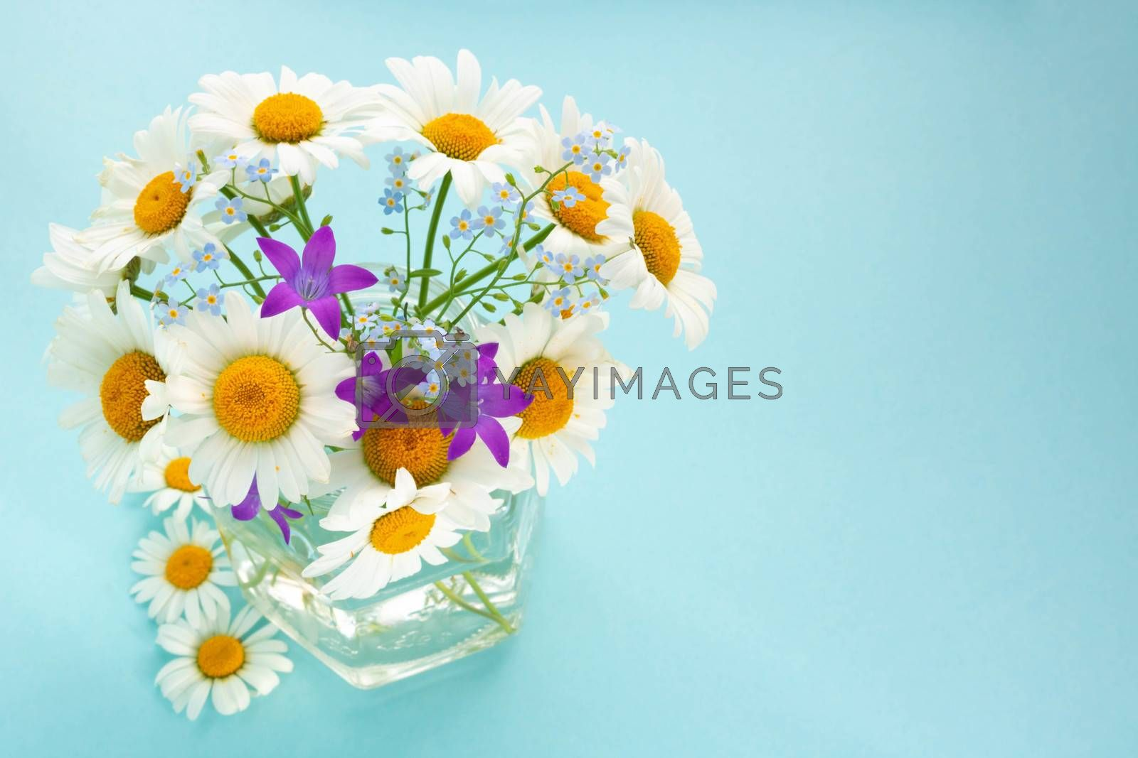 Chamomile, bluebells and forget-me-nots.Bouquet in a glass jar on a blue background