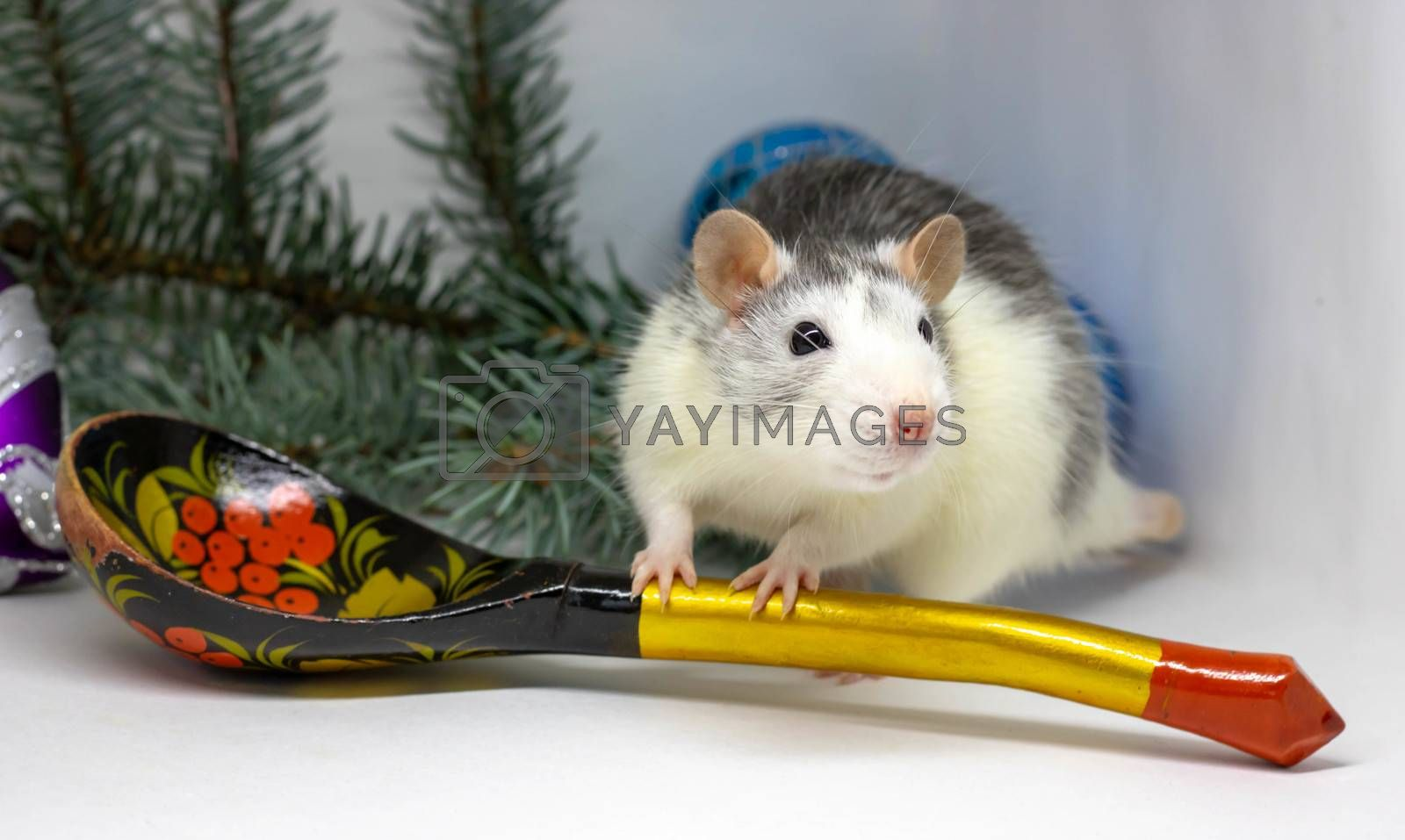 Cute silver rat sits around a large wooden spoon. Chinese New Year symbol 2020.