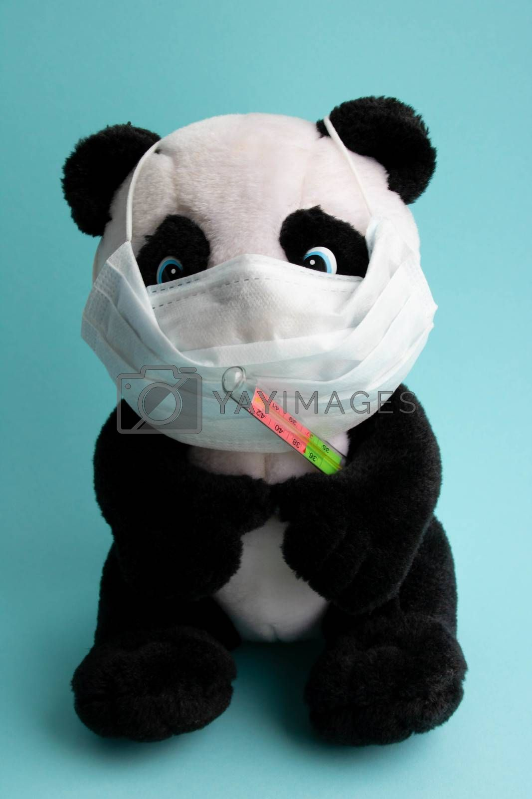 A toy panda in a medical mask with a thermometer sits on blue background. Coronavirus treatment concept.