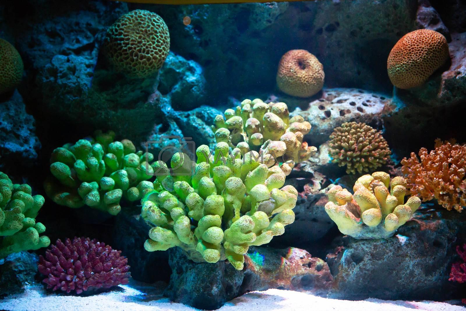 Flower sea living coral and reef colorful under deep water of sea ocean
