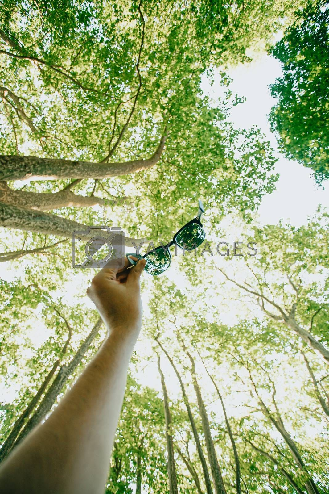 A male hand grabbing the sunglasses in the air with the trees as the background