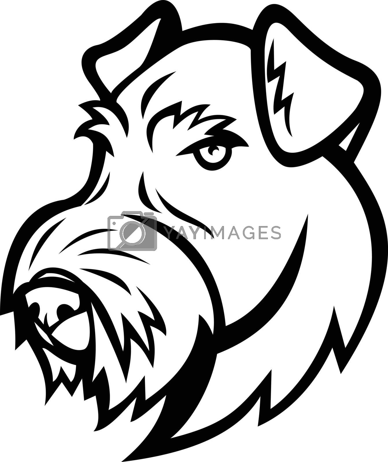 Mascot illustration of head of an Airedale Terrier, Bingley Terrier or Waterside Terrier, a dog breed of terrier type viewed from front isolated background in retro black and white style.