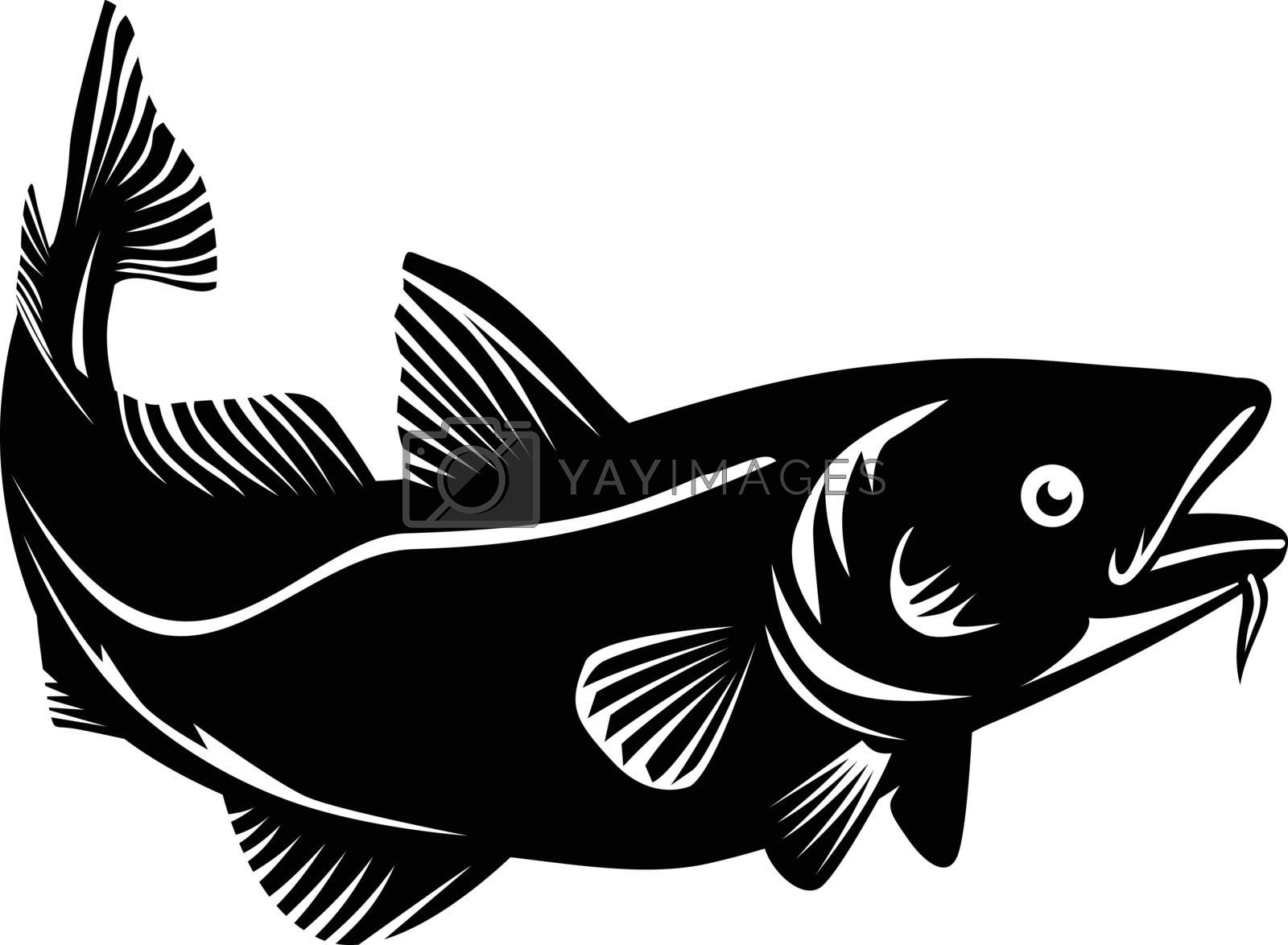 Woodcut style illustration of an Atlantic cod Gadus morhua, a benthopelagic fish of the family Gadidae commercially known as cod or codling swimming up on isolated background in black and white.