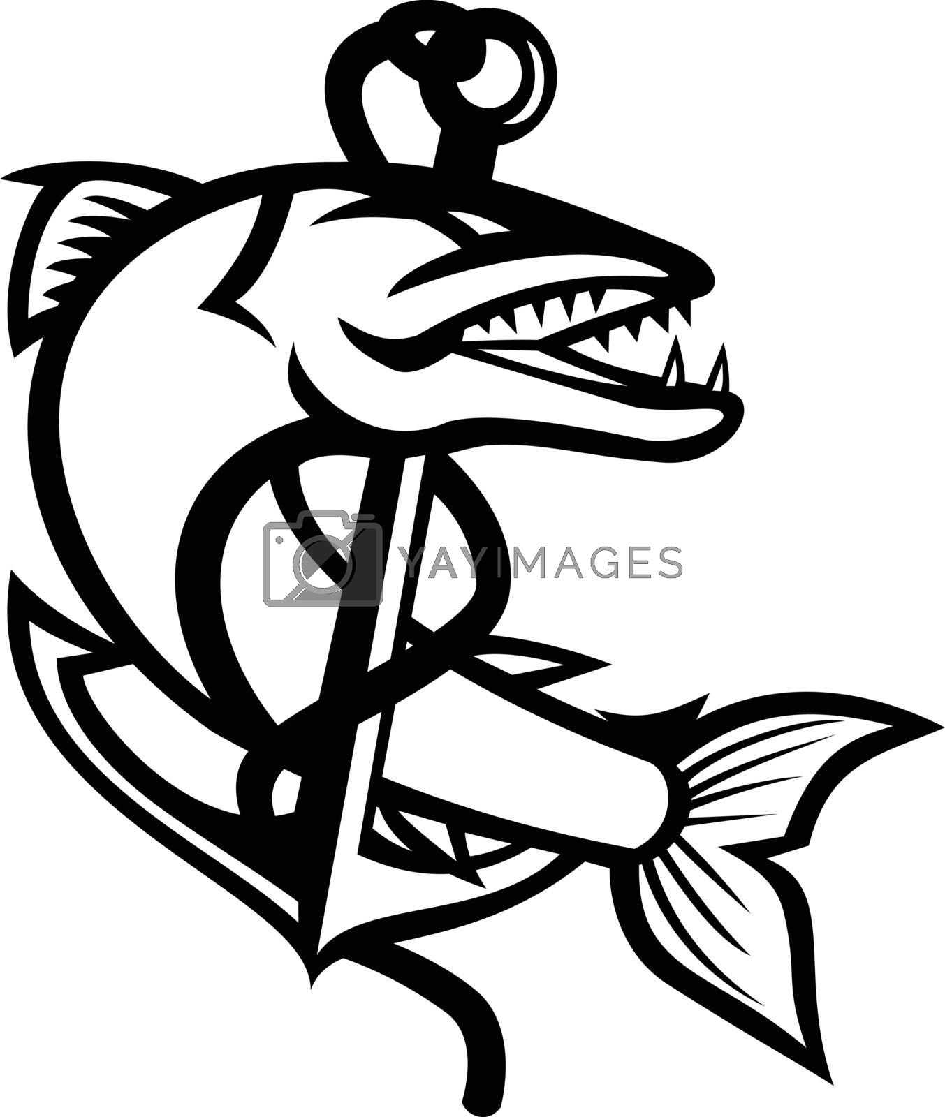 Mascot black and white illustration of great barracuda, a saltwater fish that is snake-like with fearsome appearance and ferocious behavior coiling up sea claw anchor on isolated background in retro style.