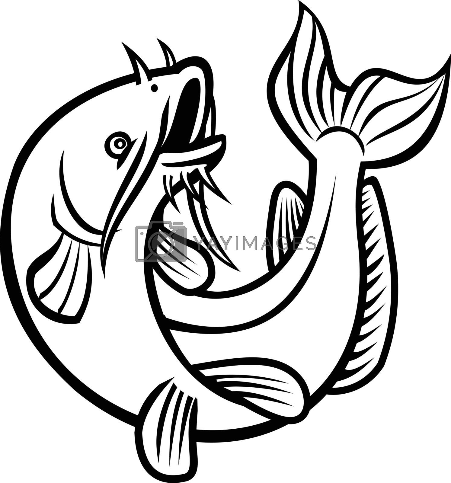 Cartoon or caricature style illustration of a blue catfish Ictalurus furcatus, North America's largest catfish species, jumping up on isolated white background done in black and white.