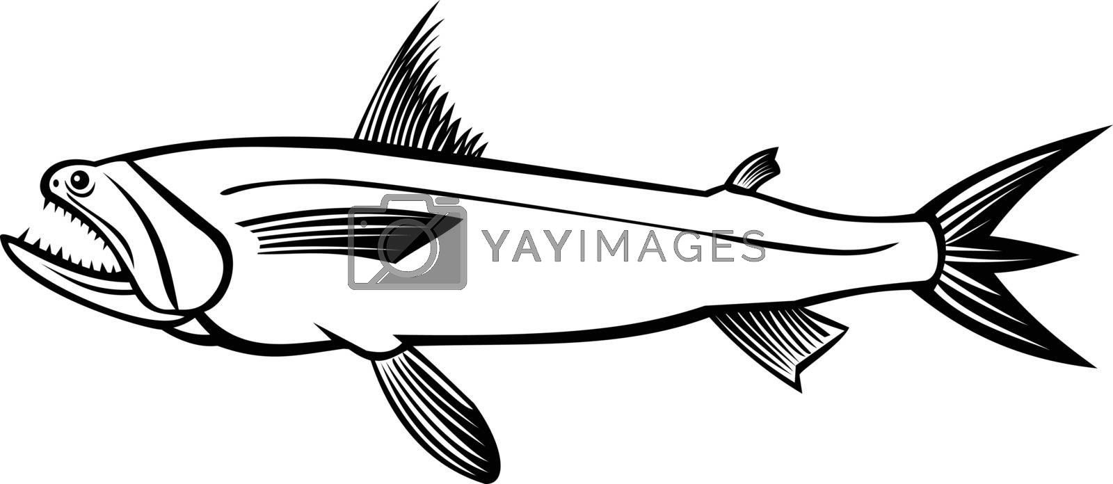 Stencil illustration of a Bombay duck fish, Harpadon nehereus, bummalo, bombil, boomla or strange fish, a species of lizardfish, viewed from side on isolated background in black and white retro style.
