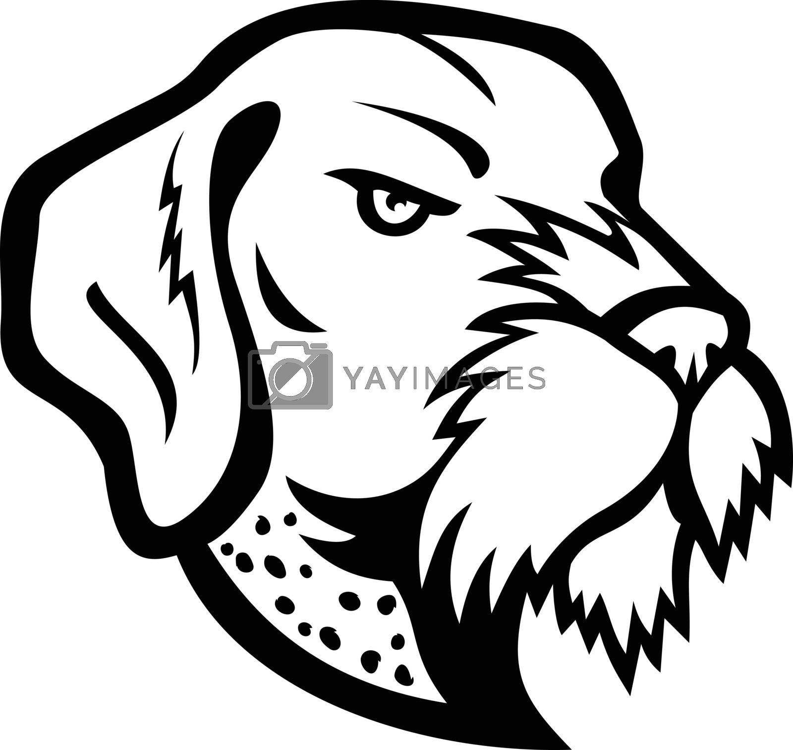 Mascot icon illustration of head of a German Wirehaired Pointer, a medium to large-sized griffon type breed of dog viewed from side on isolated background in retro black and white style.