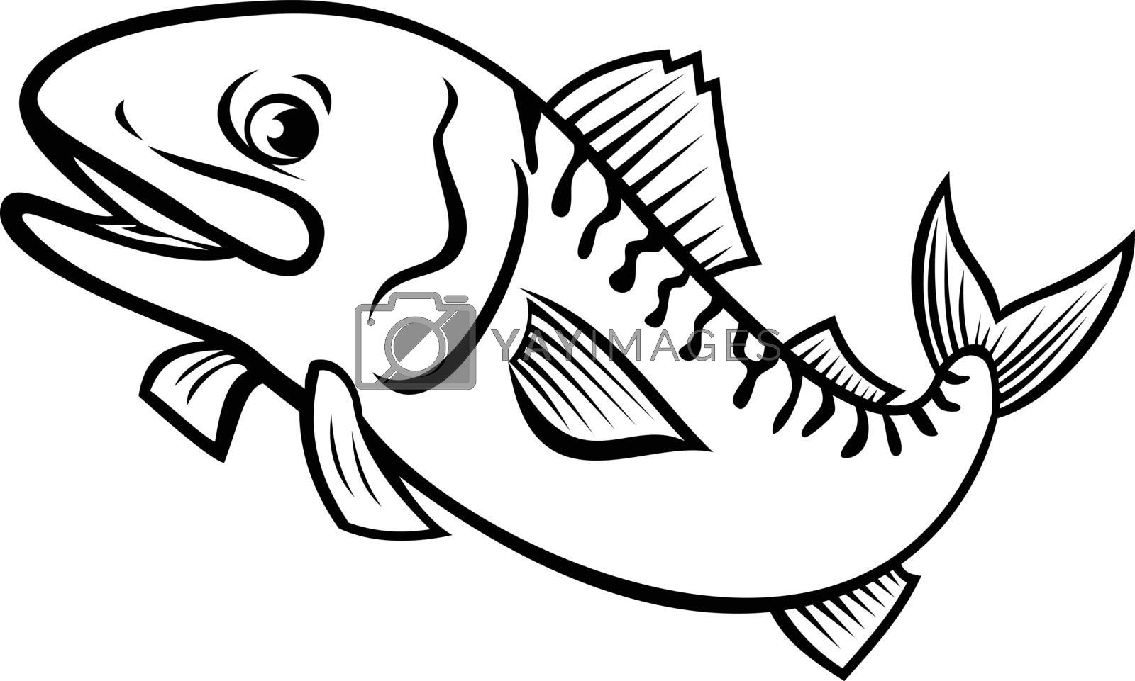 Cartoon style illustration of an Atlantic mackerel, Boston mackerel or Norwegian mackerel, a fish species found in the temperate waters jumping up on isolated background done in black and white.