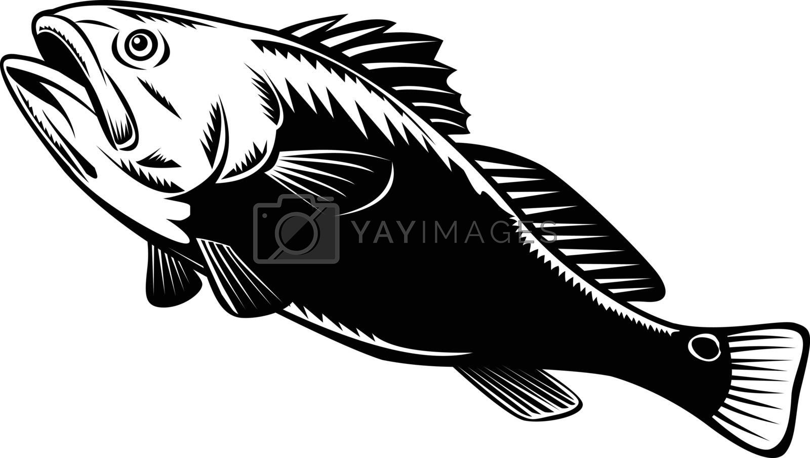 Woodcut illustration of a red drum, redfish, channel bass, puppy drum or spottail bass, a game fish found in the Atlantic Ocean from Florida to Mexico, jumping done in black and white retro style.
