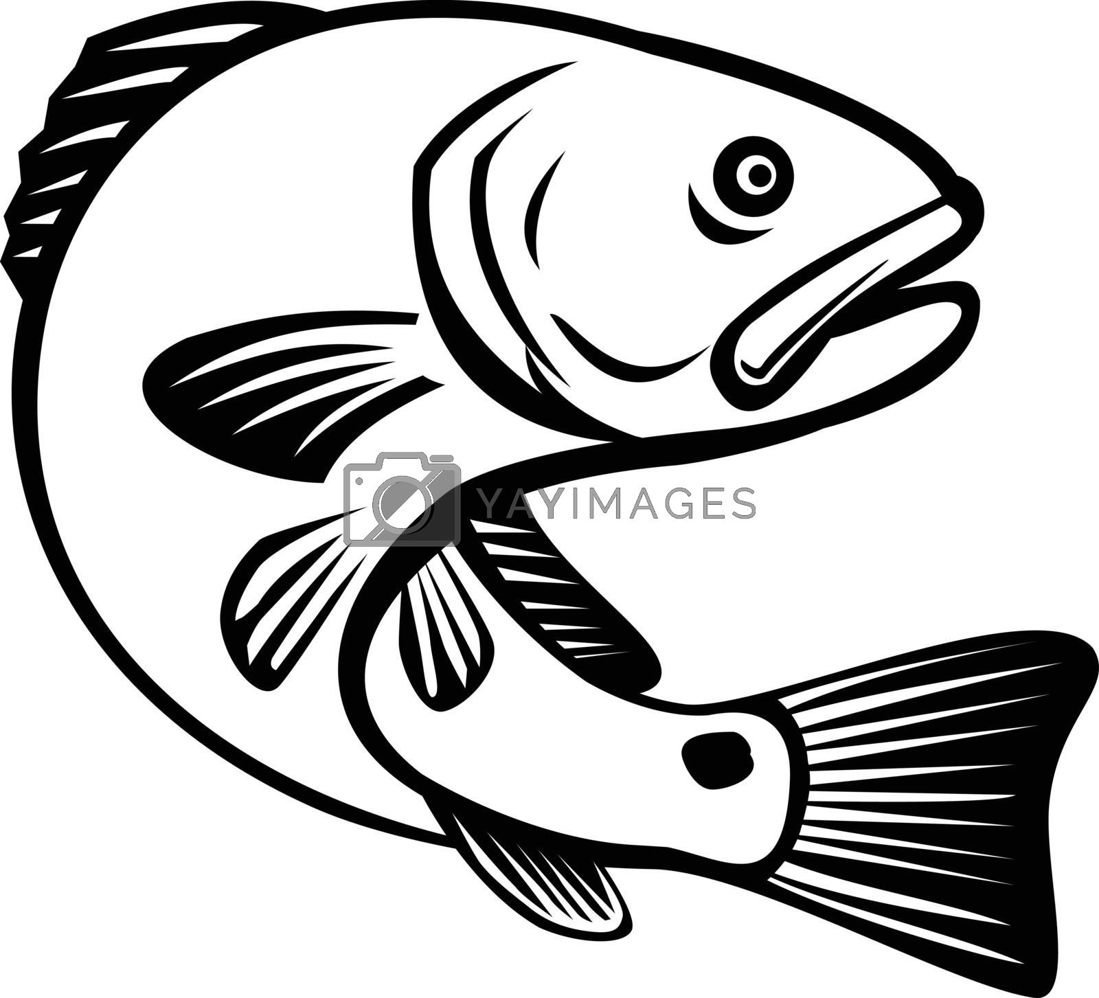 Illustration of a red drum, redfish, channel bass, puppy drum or spottail bass, a game fish found in the Atlantic Ocean from Florida to northern Mexico, jumping up done in black and white retro style.