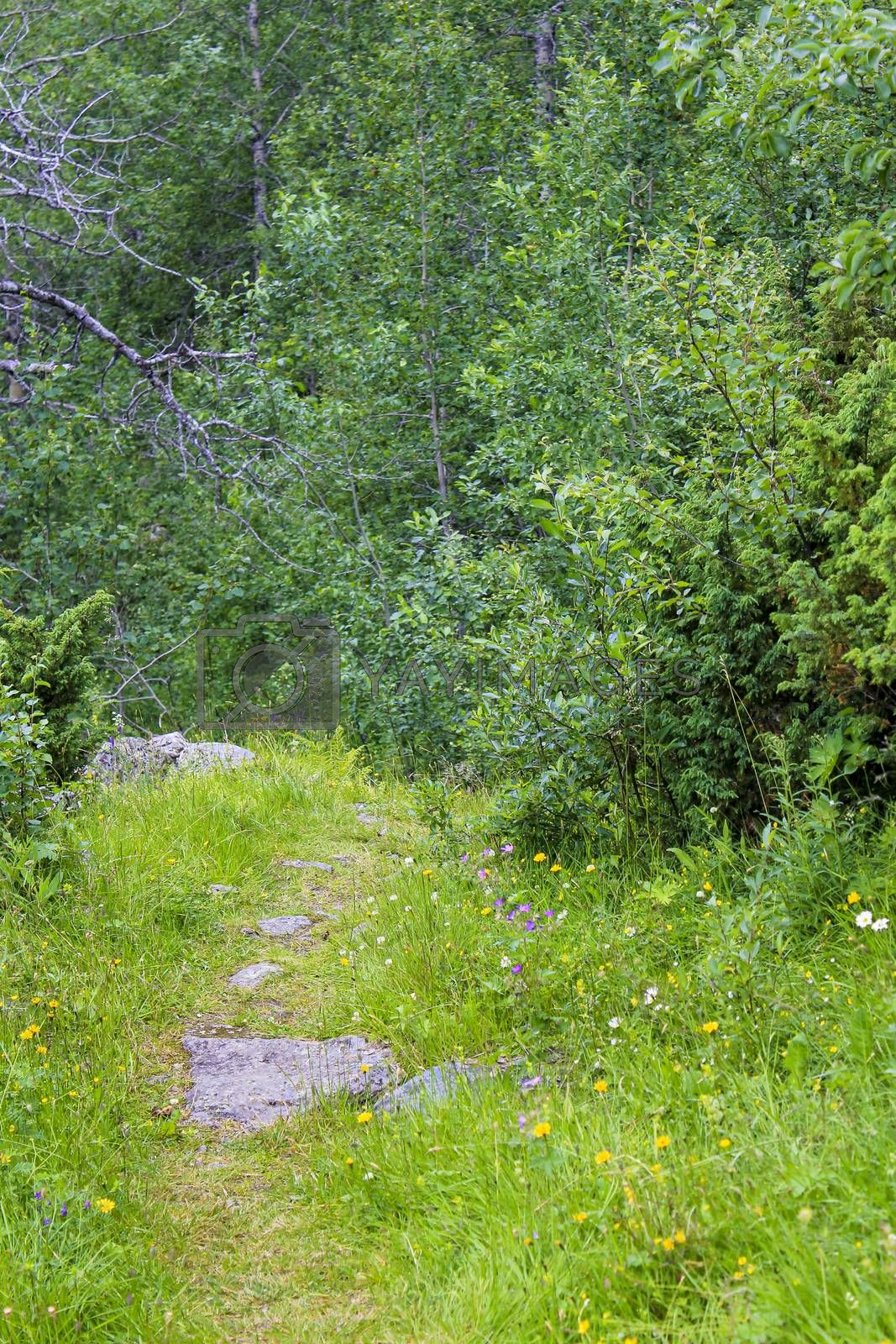 Hiking trail in the forest in the mountains of Hemsedal, Viken, Norway.