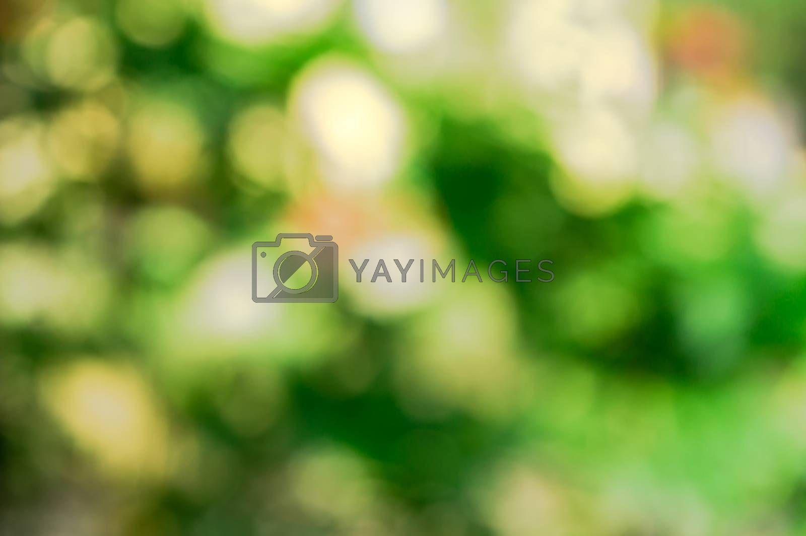 Shiny highlights of Sunlight shines through Out of focus Green leaves create a beautiful bokeh composition. Nature Background image. Cpoy Space room for black color text on green background.