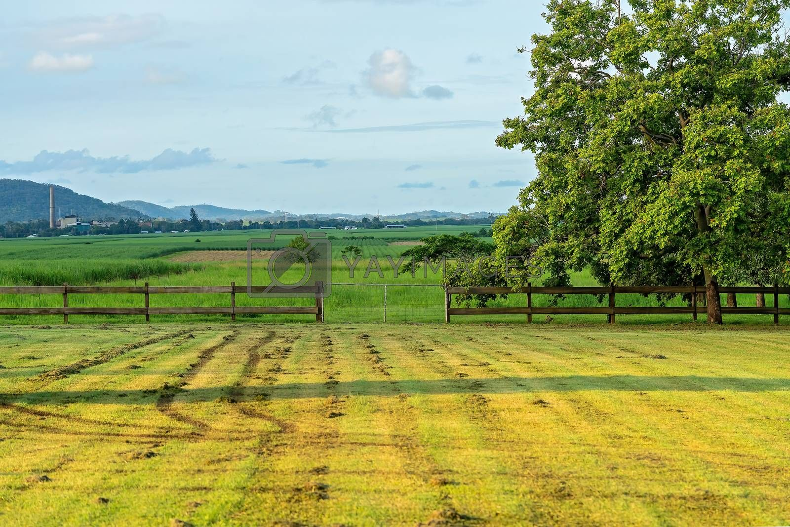 Freshly mowed lawn with late afternoon light casting shadows, with large trees and overgrown paddock in the background, a sugar mill on the horizon