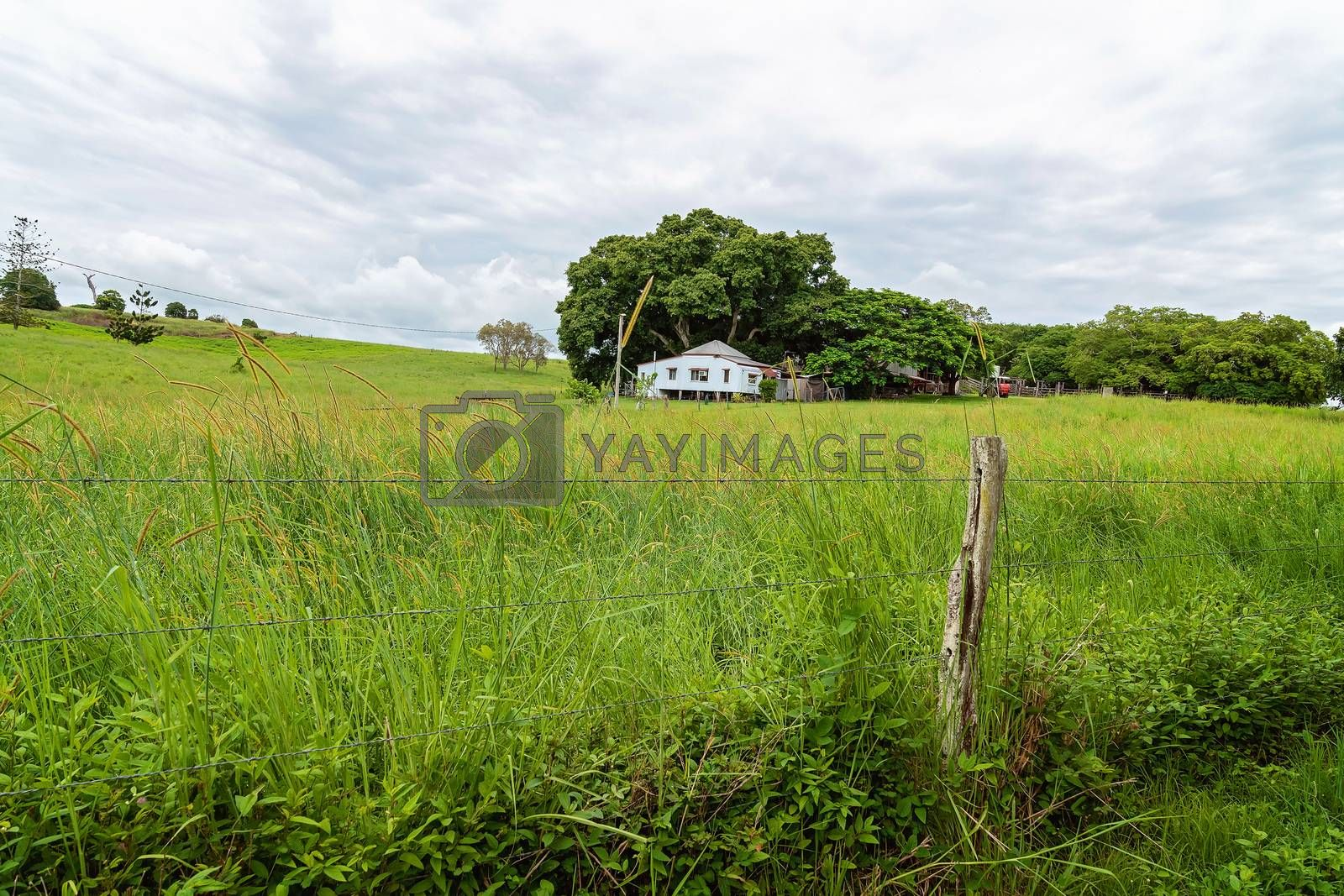 A small old country home in a lush green landscape with grass growing wild after recent rains