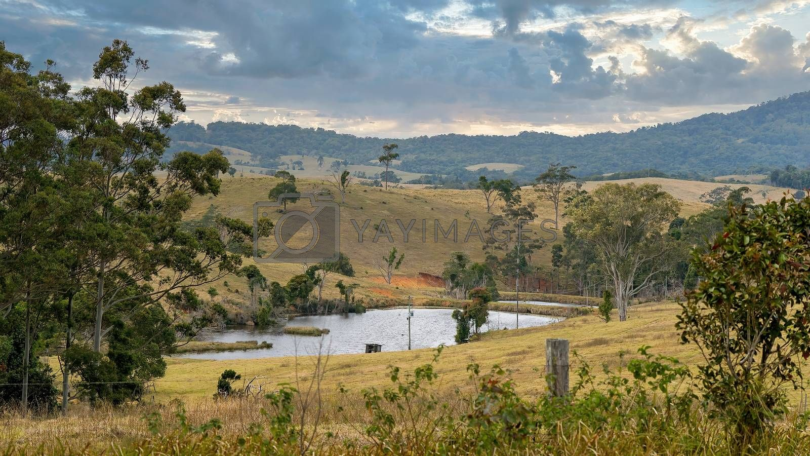 Small dams on a rural dairy property in a valley between the mountains for watering stock