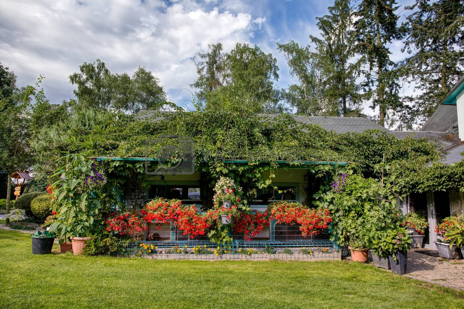 Beautiful summer garden with conifer trees, green grass and evening sun. Cut grass, Professional luxury gardening concept.Pergola with red Begonia boliviensis and petunia sufinia flowers