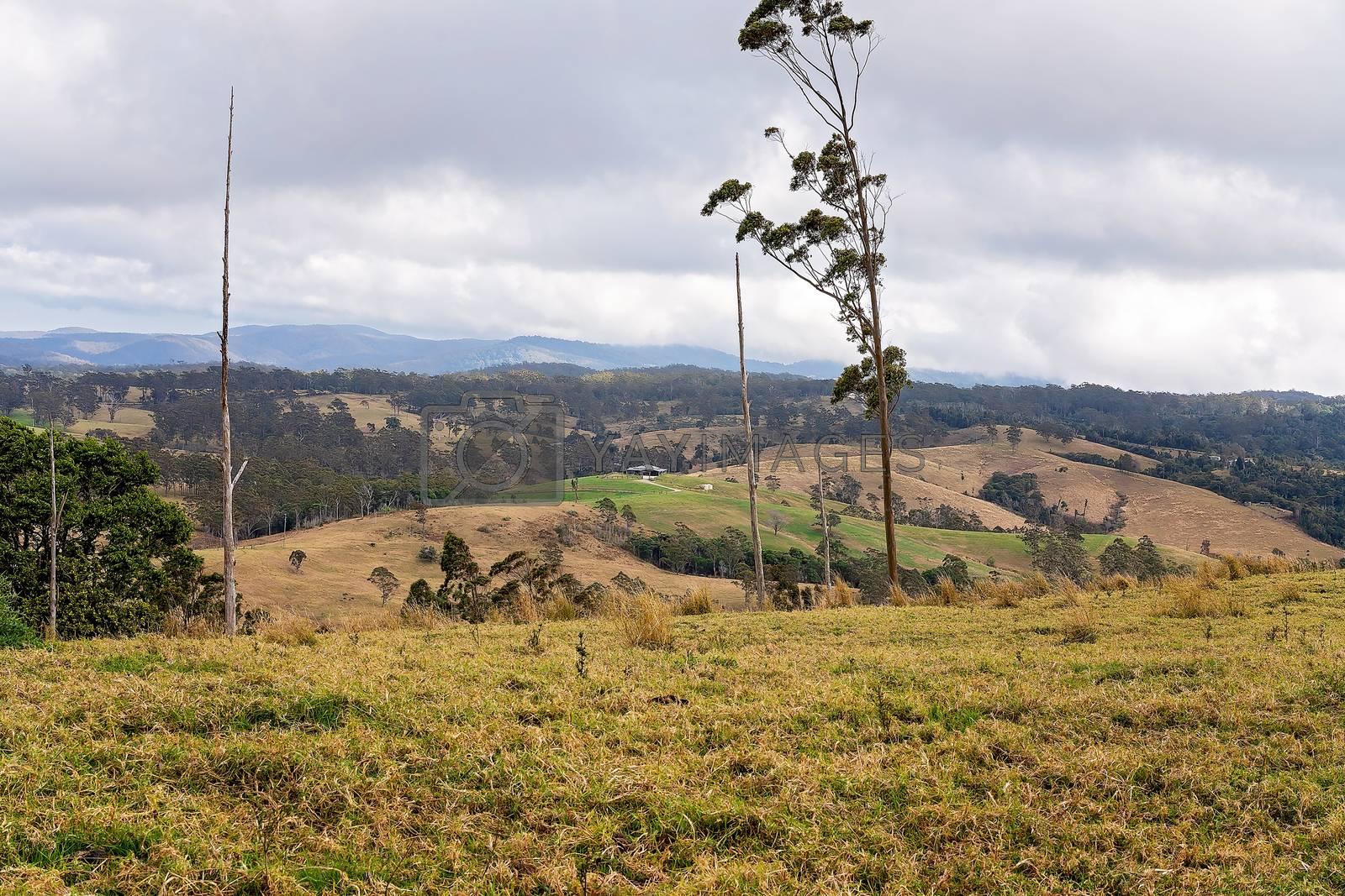 Australian dairy farms along a mountaintop