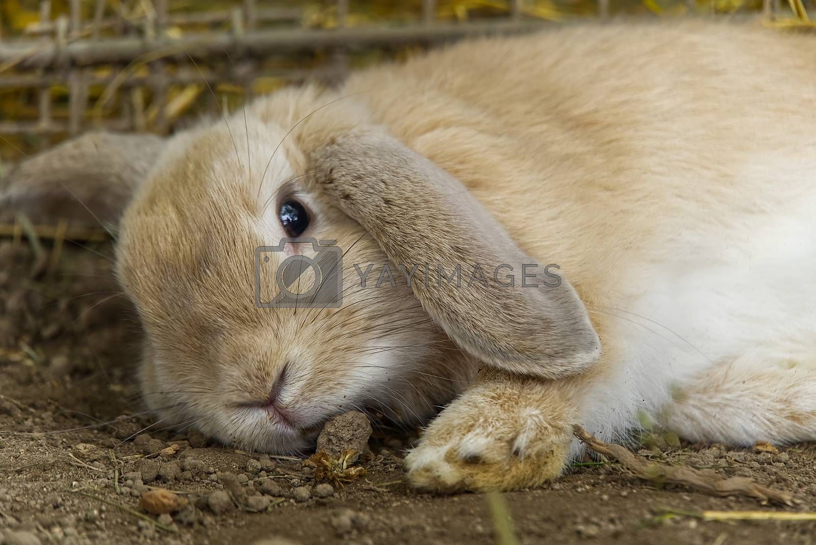 Cute fluffy rabbit in the hay. Gray rabbit on Dry Grass