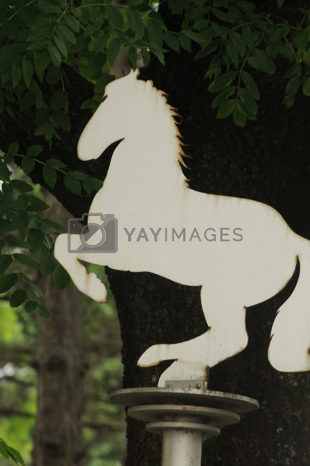 white Lippizan horse breed sign in front of a tree
