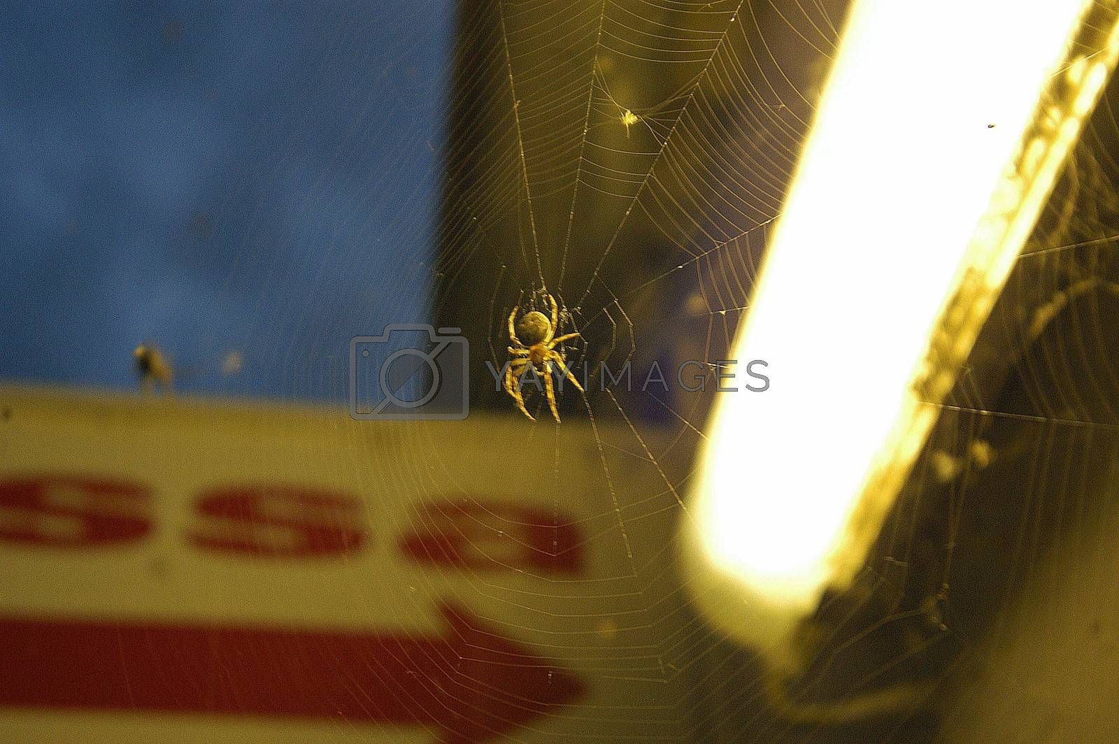 a spiderweb with the spider beneath a city light at night