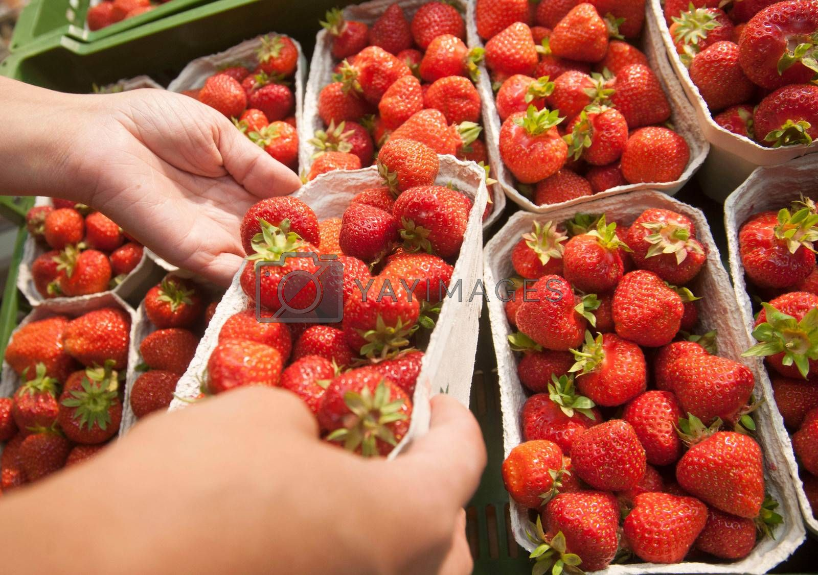 fresh red strawberries in a paper box on the market