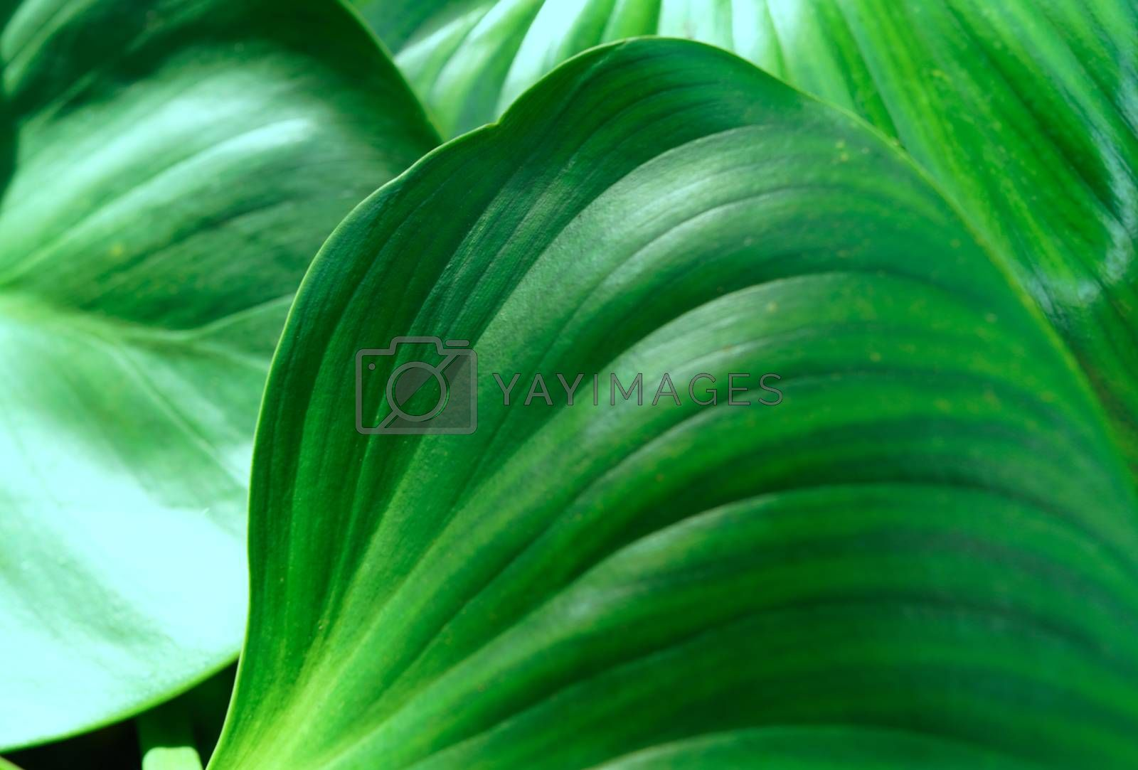 A close-up of the verdant foliage in the botanical garden, selective focus.