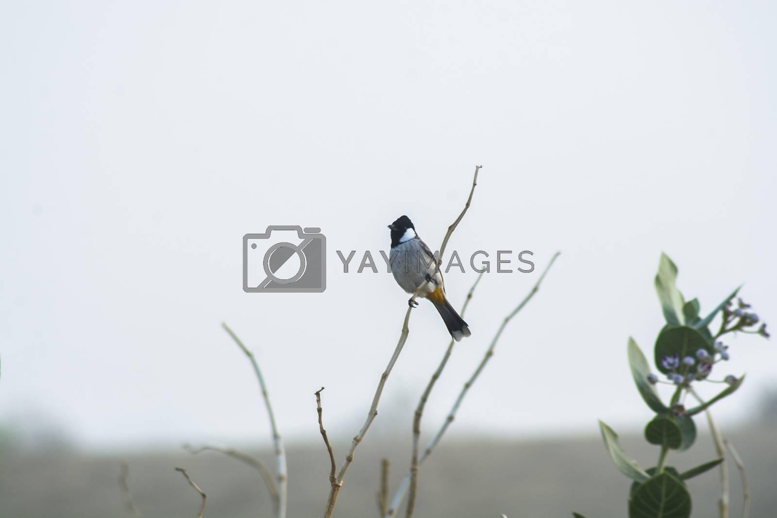 Wild bird on branch on white background