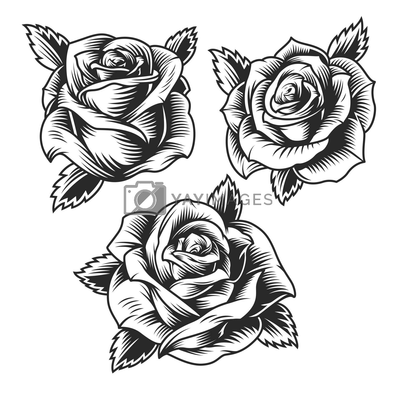 Vintage beautiful rose flowers set in monochrome style isolated vector illustration