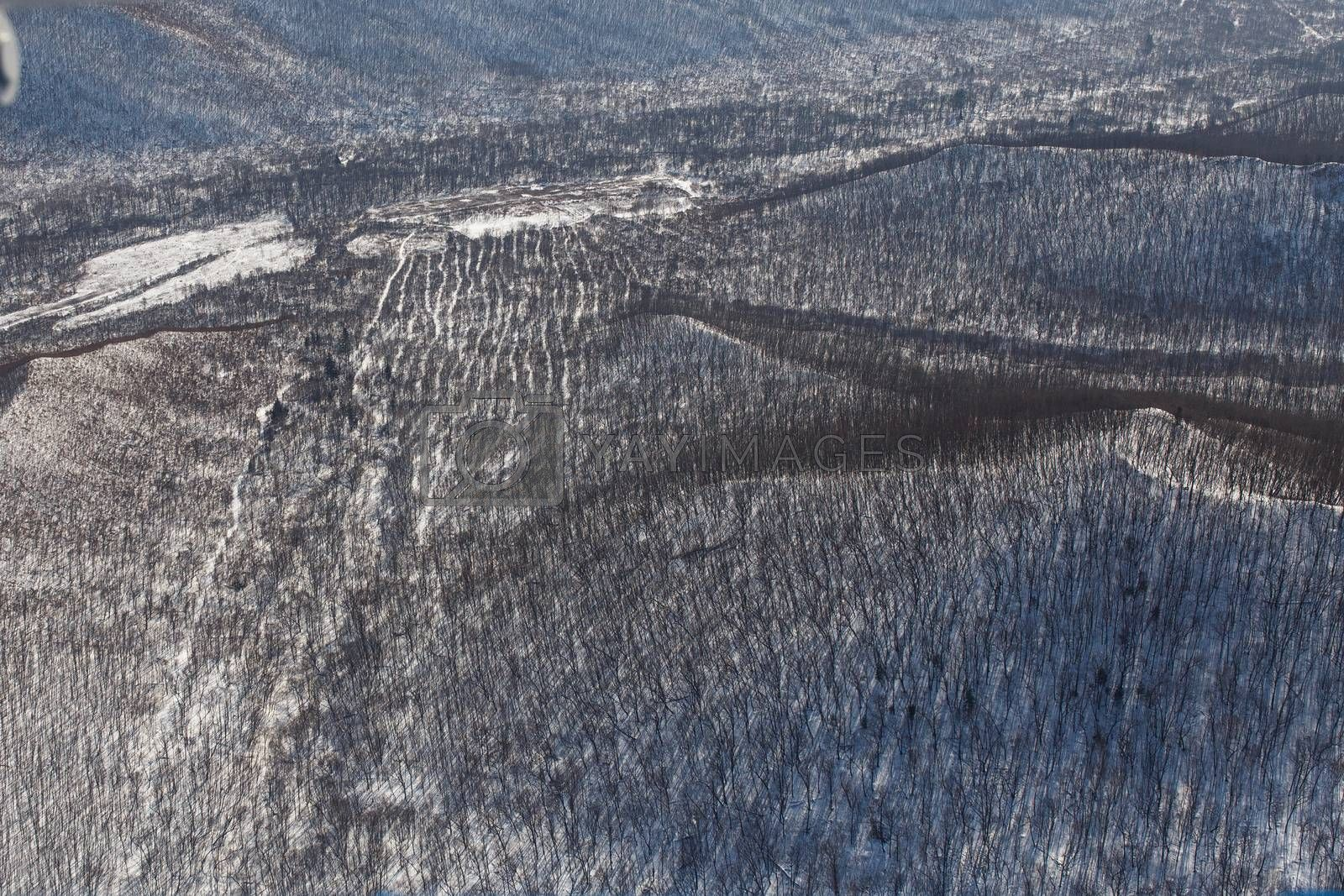 Winter coniferous forest, captured from a helicopter