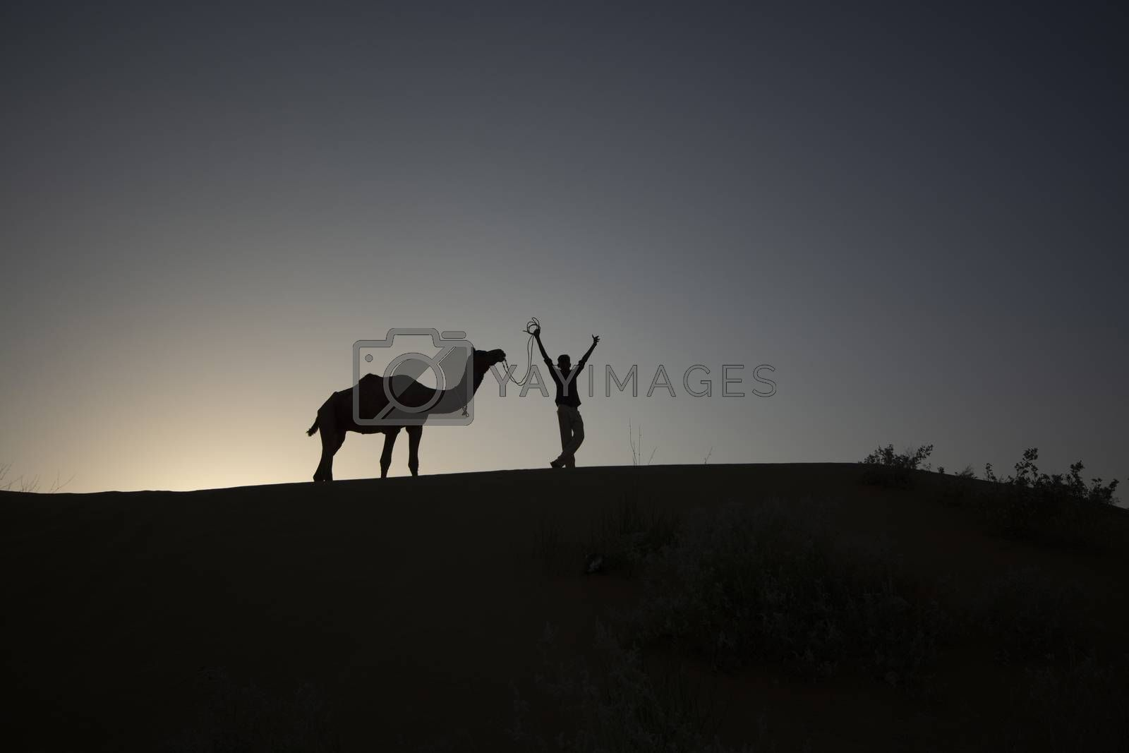 Silhouette photography of boy and camel at twilight