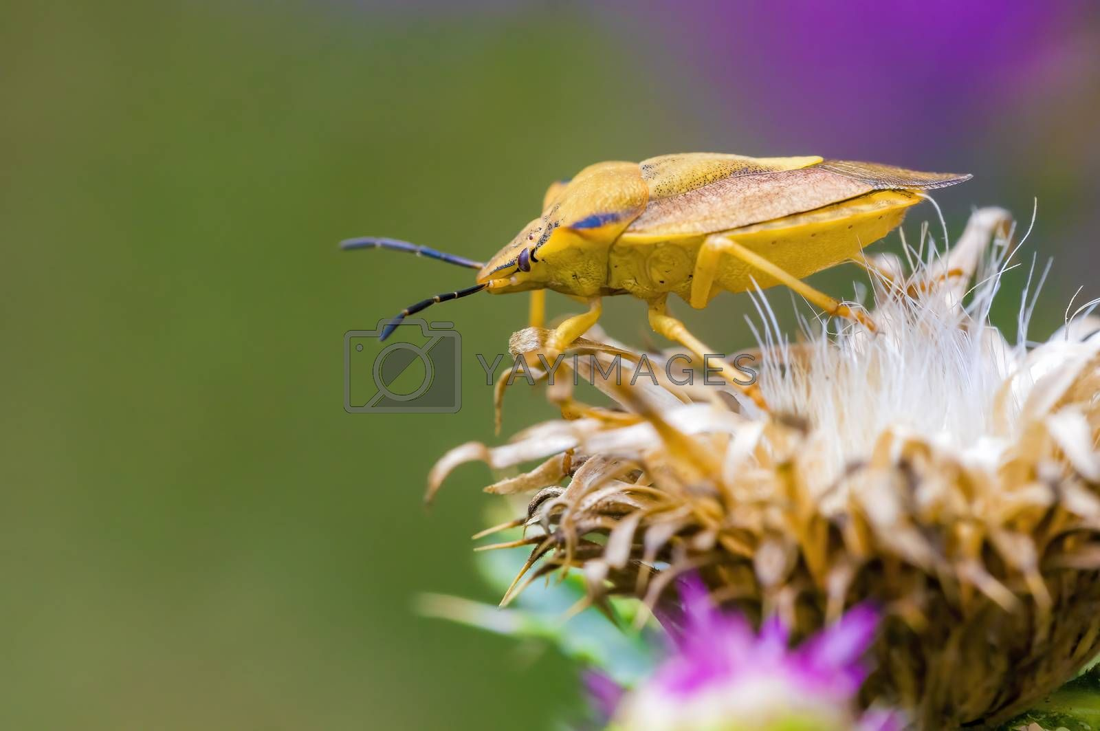 a Small beetle insect on a plant in the meadows