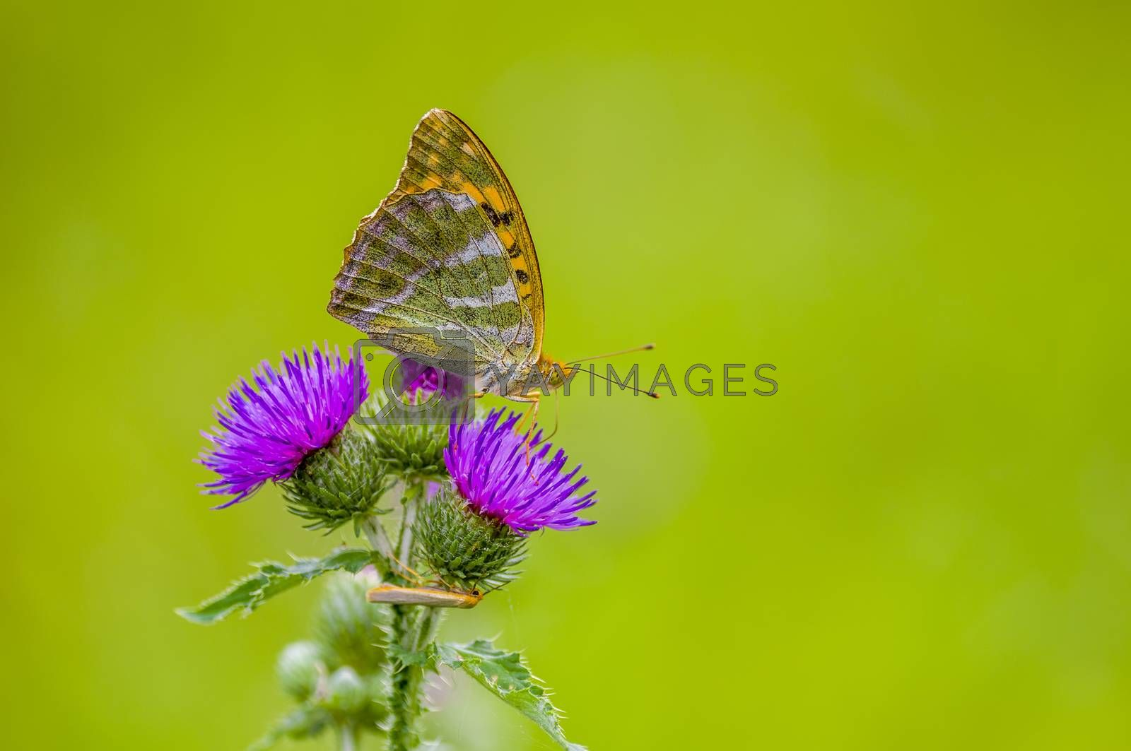 a Small butterfly insect on a plant in the meadows