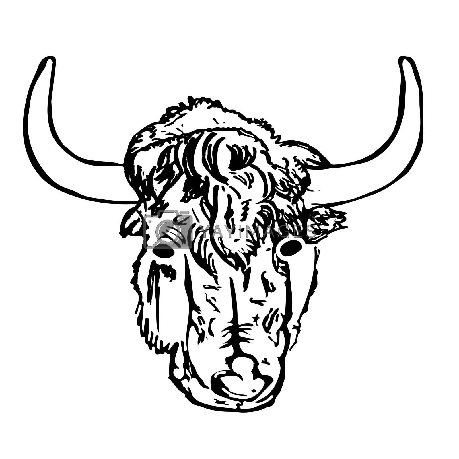 Antique engraving of highland cattle. Farmers bull. American bison. Lunar horoscope sign ox, bull, cow. Scottish rural animal. Stock vector illustration