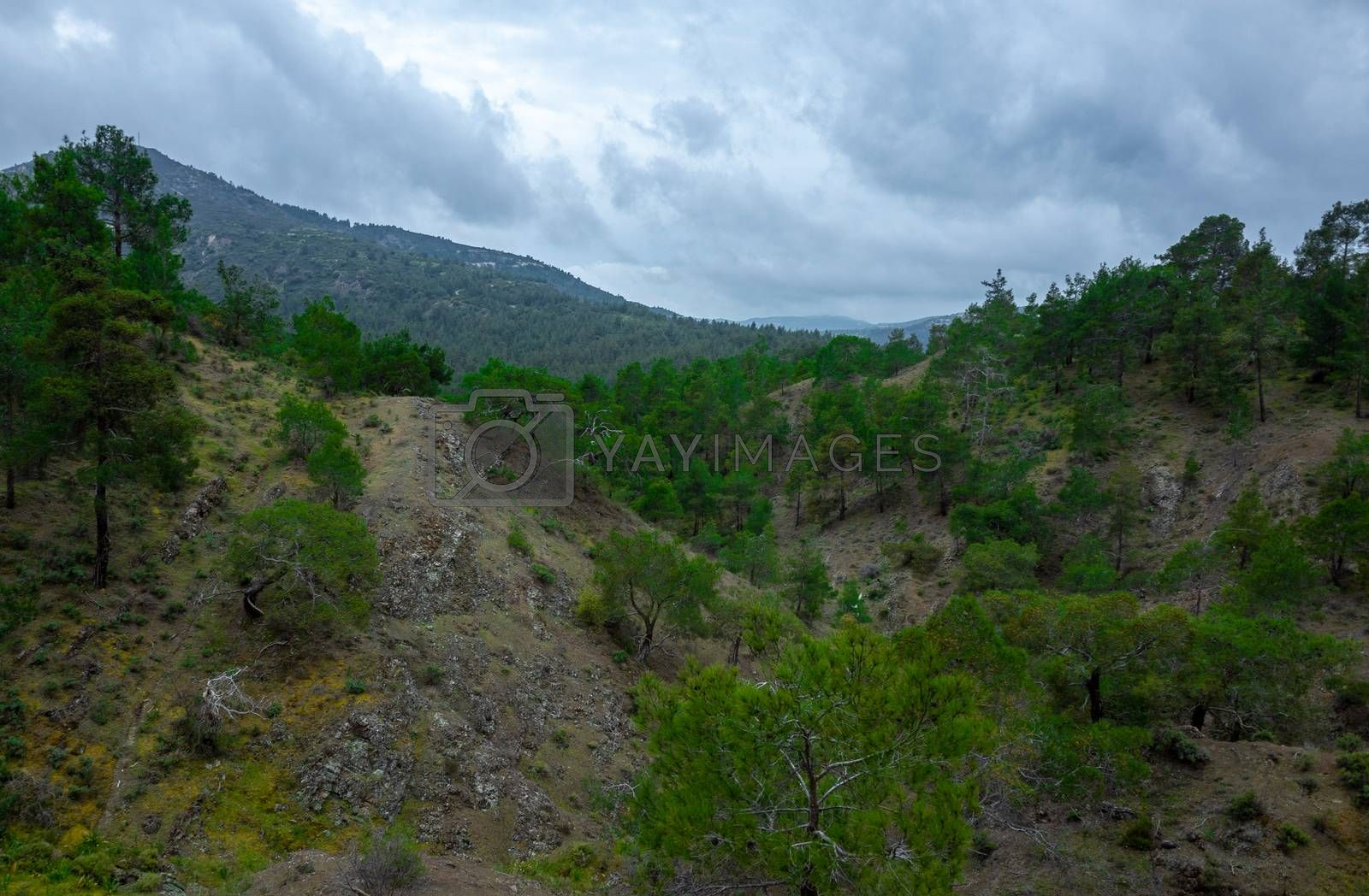 Forest-covered green hills on a bright Sunny summer day in the mountains of Central Cyprus.